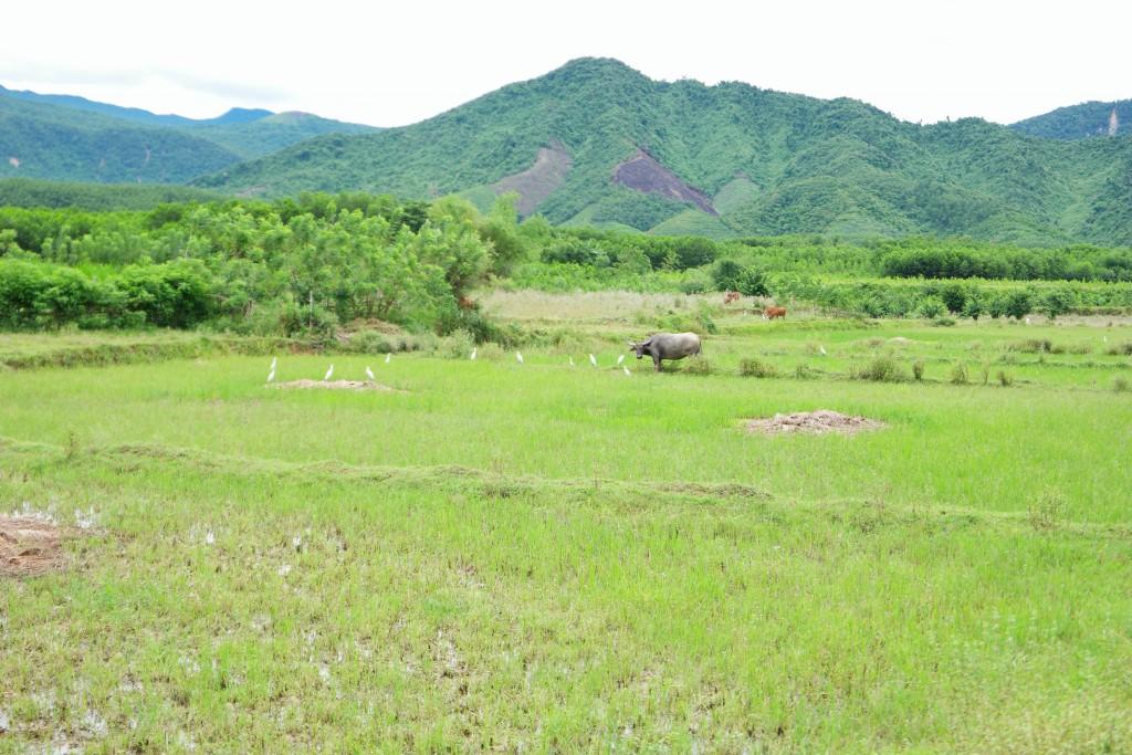 Quế Trung, Nông Sơnの田と山